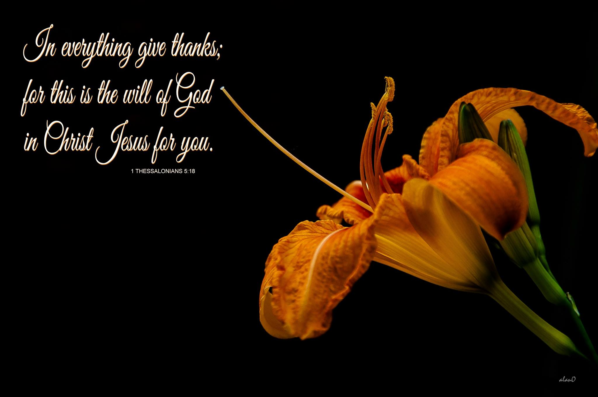1 Thessalonians 5:18 In everything give thanks; for this is the will of God in Christ Jesus for you