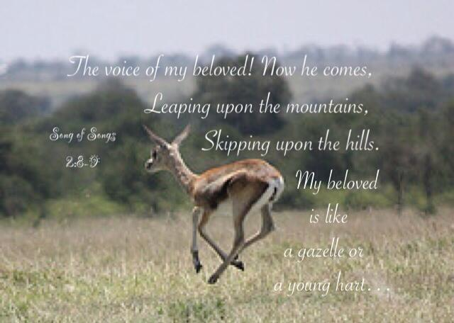 Song of Songs 2:8-9 The voice of my beloved! Now he comes, Leaping upon the mountains, Skipping upon the hills. My beloved is like a gazelle or a young hart. Now he stands behind our wall; He is looking through the windows, He is glancing through the lattice.