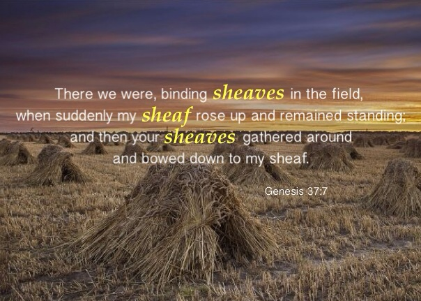 Genesis 37:7 There we were, binding sheaves in the field, when suddenly my sheaf rose up and remained standing; and then your sheaves gathered around and bowed down to my sheaf.