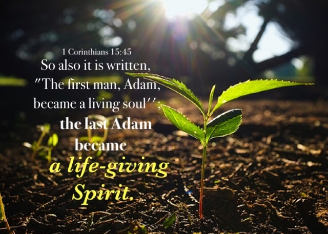 "1 Corinthians 15:45 So also it is written, ""The first man, Adam, became a living soul""; the last Adam became a life-giving Spirit."
