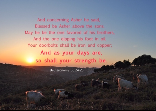 Deuteronomy 33:24-25 And concerning Asher he said, Blessed be Asher above the sons. May he be the one favored of his brothers, And the one dipping his foot in oil. Your doorbolts shall be iron and copper; And as your days are, so shall your strength be.