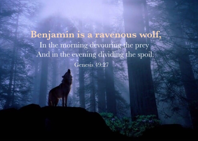 Genesis 49:27 Benjamin is a ravenous wolf, In the morning devouring the prey And in the evening dividing the spoil.