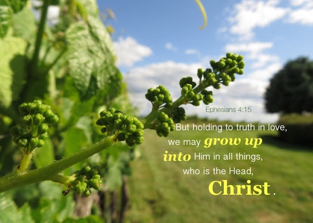 Ephesians 4:15 But holding to truth in love, we may grow up into Him in all things, who is the Head, Christ.
