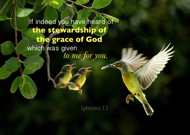 Ephesians 3:2 If indeed you have heard of the stewardship of the grace of God which was given to me for you.