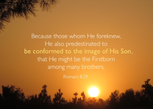 Romans 8:29 Because those whom He foreknew, He also predestinated to be conformed to the image of His Son, that He might be the Firstborn among many brothers.