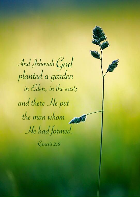 Genesis 2:8 And Jehovah God planted a garden in Eden, in the east; and there He put the man whom He had formed.