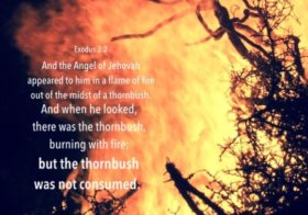 Exo. 3:2 And the Angel of Jehovah appeared to him in a flame of fire out of the midst of a thornbush….but the thornbush was not consumed.